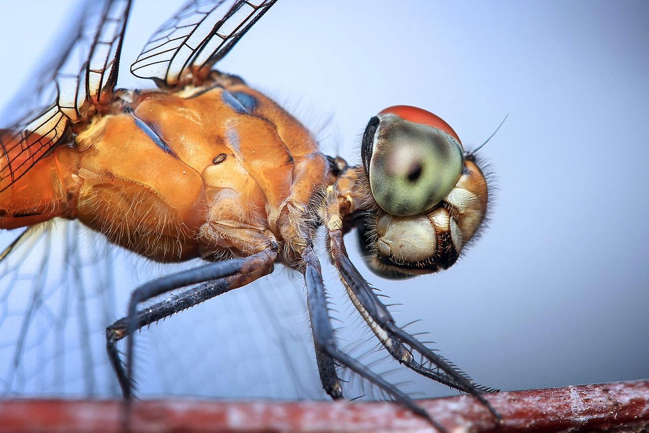 dragonfly-1122445_1280