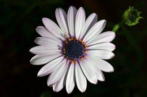 flower-2420589_640