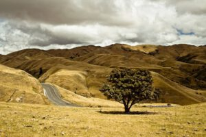 roadway-1149613_1280